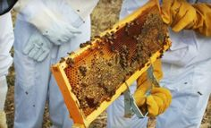 Round Rock Honey Austin Deal of the Day | Groupon Austin