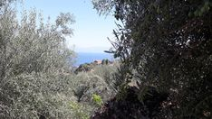 Olive Tree, Homeland, Greece, Country Roads, Nature, Outdoor, Inspiration, Instagram, Greece Country