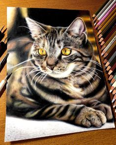 As much as it's hard to believe, these mind-blowingly realistic images are not photographs but hand-drawn pencil drawings. This art style is called hyperrealism… Pencil Art Drawings, Cool Art Drawings, Animal Drawings, Realistic Cat Drawing, Hyperrealistic Drawing, Thanksgiving Cartoon, Epic Art, Color Pencil Art, Japanese Artists