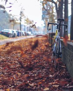 """""""If you break you don't win"""". Hope the autumn days are treating you good and that you stay true to your metal steed what ever road it may take you!  keep the pedals going!!  #bikepackerscycling #giant #cycle #cycling #wymtm #baaw #autumn by bikepackerscycling"""