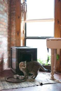 Turn any small cabinet into a stylish way to hide your litter box, with a convenient removable top and cat door.