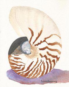 Beach Nautilus Seashell Art Print of Original Painting, Watercolor Reproduction, Ocean Sea Life Underwater, Barbara Rosenzweig, Etsy Decor Seashell Painting, Seashell Art, Watercolor Paintings, Original Paintings, Watercolors, Watercolor Fish, Canvas Art Prints, Fine Art Prints, Painting Canvas