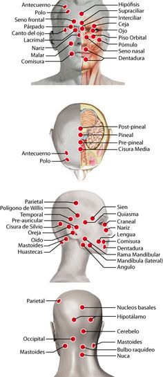 Acupuncture Points, Acupressure Points, Magnet Therapy, Medicine Student, Human Body Anatomy, Anatomy And Physiology, Chinese Medicine, Massage Therapy, Ayurveda