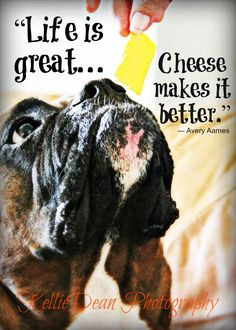 """omg....that's so funny....my dogs no exactly when we are getting the cheese out and they will sit there and look at you....as to say """"hey can I have a piece""""!!"""