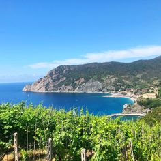 Wine is love at Vétua, a vineyard overlooking Monterosso al Mare. Travel Info, Us Travel, Italy Travel, Wine Names, Northern Italy, Circle Of Life, Italian Dishes, Cinque Terre, Cabernet Sauvignon