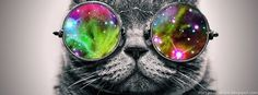 I pinned a cat with hipster glasses Harry. We both share an interest in cats. Great Quotes, Quotes To Live By, Quick Quotes, Super Quotes, Awesome Quotes, Life Quotes, Rainbow Family, Galaxy Cat, Just Be You