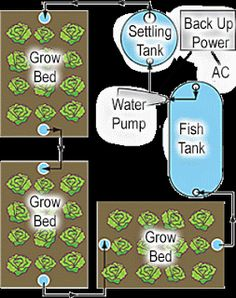 Farming & Agriculture: Aquaponics System Explained