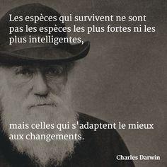 Les espèces qui survivent ne sont pas les espèces les plus fortes ni les plus intelligentes, mais celles qui s'adaptent le mieux aux changements. (Charles Darwin) #citation #changement