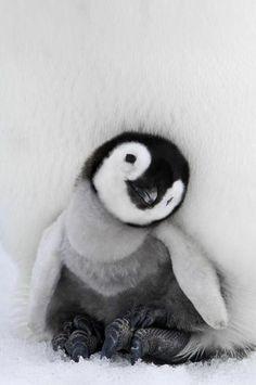 Tiny Baby Animals, Baby Animals Super Cute, Baby Animals Pictures, Cute Little Animals, Cute Animal Pictures, Cute Funny Animals, Artic Animals, Animal Babies, Happy Animals