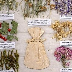 Close-up view of 7 plant Navajo Herbal Medicine Chart.   This Herbal Medicine Chart displays: Snake Weed, Navajo Tea, Blue Flower Lupine, Sumac Berries, Rabbit Brush, Juniper Mistletoe, and Purple Bee Plant. http://www.bairsindiantradingco.com/craft_items/74-MC-08.htm