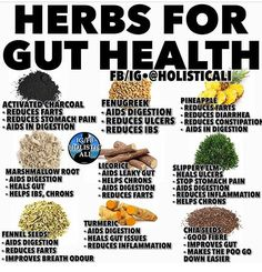 Gut Health, Holistic Health Tips for Beginners Cold Home Remedies, Natural Health Remedies, Herbal Remedies, Healing Herbs, Natural Healing, Aromatic Herbs, Natural Medicine, Herbal Medicine, Health And Nutrition