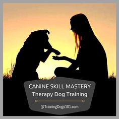 Canine Skill Mastery: Therapy Dog Training