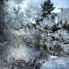 Frozen frost ! AWEsome!