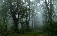 Foggy Forest, Dark Forest, A Course In Miracles, Nature Aesthetic, Forest Fairy, Faeries, Aesthetic Pictures, Mists, Scenery