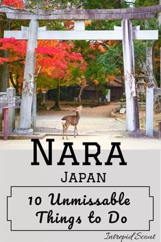 Trying to decide what to do and see in Nara? I have compiled a list of 10 unmissable things to do in Nara. So, stop searching and find out what they are. Japan Travel Tips, Asia Travel, Kyoto, Stuff To Do, Things To Do, Backpacking Asia, Nara, World Heritage Sites, Location