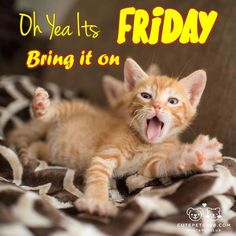 Its Friday  cat