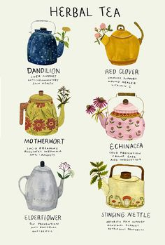 """madisonsaferillustration:""""Ive been a bit under the weather. Here's a poster about medicinal herbs, many of which im using now."""" madisonsaferillustration:""""Ive been a bit under the weather. Here's a poster about medicinal herbs, many of which im using now. Herbal Magic, Tea Blends, Tea Recipes, Food Illustrations, Book Of Shadows, Herbal Medicine, Herbal Remedies, Health Remedies, Afternoon Tea"""