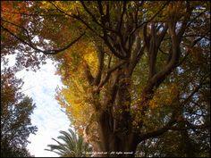 https://flic.kr/p/BnQSsk | (575) Braços | Botànic de la ciutat de València (L'Horta) País Valencià ////
