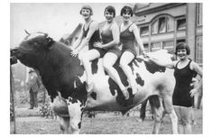 Three young ladies straddling a rather hefty sized cow while at the Pacific National Exhibition in 1927.