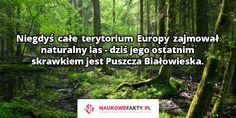 Niegdyś całe terytorium Europy zajmował naturalny las - dziś jego ostatnim skrawkiem jest Puszcza Białowieska.