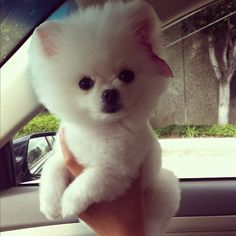 i want a puppy like this so bad that it makes me sad when i look at it. :\