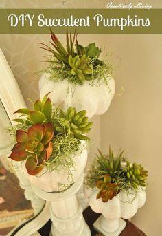 diy succulent pumpkins, flowers, gardening, succulents