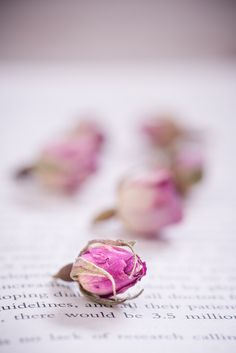 Little My, Rose Petals, Rose Buds, Dried Flowers, Herbalism, Spices, Wallpapers, Coffee, Twitter