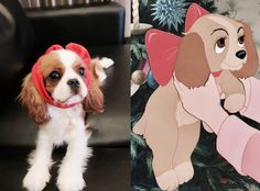 King Charles Puppy, Cavalier King Charles Dog, King Charles Spaniel, Cute Dogs And Puppies, Baby Dogs, I Love Dogs, Roi Charles, Crazy Dog Lady, Spaniel Puppies