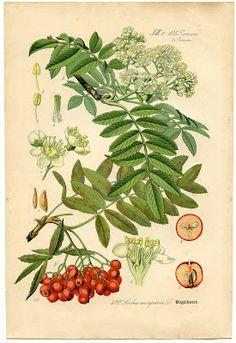 *The Graphics Fairy LLC*: Instant Art Printable - Floral Botanical #6