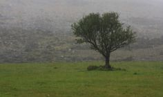 April showers on the mountainside of Carlingford Lough. April Showers, Countryside, Photography, Painting, Art, Craft Art, Photograph, Painting Art, Kunst