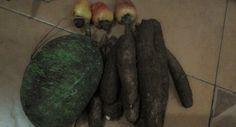 Cassava, cashew& sukun