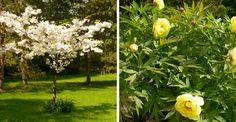 Pépiniériste : les plantes à acheter pour un beau  jardin