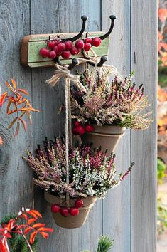 THIS COMPOSITION of heathers and paradise apples is rustic. Clay pots with diffe… THIS COMPOSITION of heathers and paradise apples is rustic. Clay pots with different varieties of heather were hung on ordinary strings. Autumn Decorating, Fall Decor, Deco Nature, Flower Pots, Flowers, Deco Floral, Autumn Garden, Fall Diy, Clay Pots