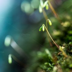 Check out Little small worlds... by Screeny's Photo Bucket on Creative Market