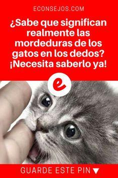 Mordeduras de gatos | ¿Sabe que significan realmente las mordeduras de los gatos en los dedos? ¡Necesita saberlo ya!