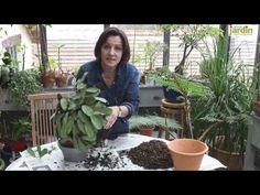 Plantes d'intérieur : plante verte intérieur | Détente jardin