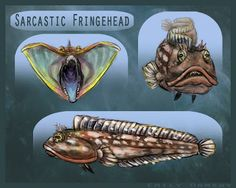 Creature Feature Concept Art: Natural History - Sarcastic Fringehead