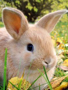 Cute baby bunny!