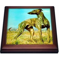 3dRose Brindle Greyhound, Trivet with Ceramic Tile, 8 by 8-inch