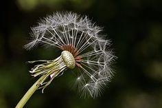 Wolfsmilch, Sommer, Natur, Pflanze