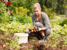 """As gardeners, we are all very aware of """"gardeners' back"""" and """"weeder's wrist"""" and """"pruner's neck!"""" Gardening is a joy but it doesn't come without its hazards! Here's how to avoid these aches and pains. Pruning Shrubs, Pruning Roses, Permaculture, Gardening For Beginners, Gardening Tips, Types Of Potatoes, Grow Potatoes, Old Farmers Almanac, First Day Of Summer"""