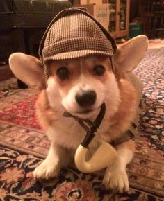 Peanut the corgi says...the noms are afoot!