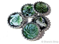 Succulents for your Fridge - Bottle Cap Magnet Set - Set of 5