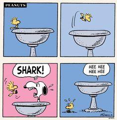 For shark week 🦈