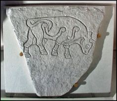Burghead Bull #5. One of 6 bull images incised on sandstone slabs found at the large Pictish fort overlooking the Moray Firth. 2 of the bulls are displayed locally, one is in the National Museum in Edinburgh and this one is in the British Museum in London. Photo by Bob Henery, University of Strathclyde.