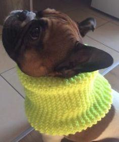 Hundeloop Neon Französische Bulldogge Schal Loop handgestrickt  | eBay