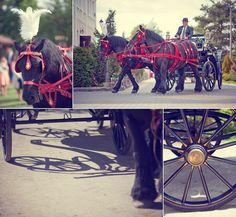 wedding horses/ bryczka konie do ślubu Łomża