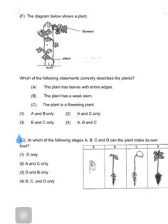 Theme 4, Seatwork # 1, Plants, Page 3