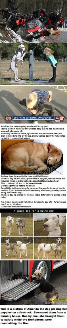 MADE ME Amazing Dogs animals adorable dog amazing story animal pets puppies stories funny animals heartwarming Love My Dog, Puppy Love, Cute Puppies, Cute Dogs, Dogs And Puppies, Awesome Dogs, Doggies, Awesome Stories, Funny Dogs