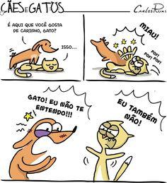Cães e Gatos - Um Sábado Qualquer Top Memes, Animal Memes, Funny Comics, Cat Love, Funny Images, Pet Care, Animals And Pets, Haha, Dog Cat